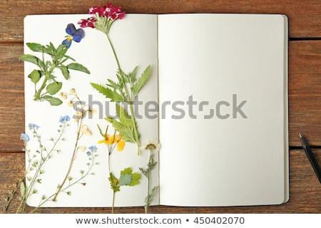 Photo stock: Livre · fleurs · illustration · livre · ouvert · séché · fleur