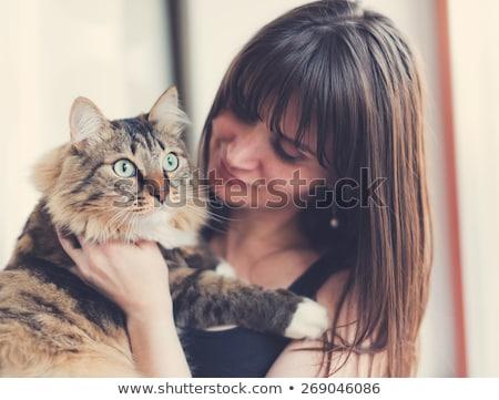 小さな · シャム猫 · 見える · カメラ - ストックフォト © lithian