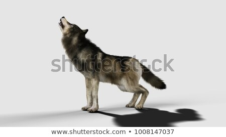cute black and brown wolf dog standing Stock photo © feedough