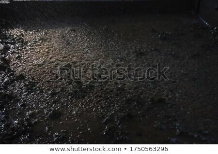 Trópusi sáros pocsolya erős koszos víz Stock fotó © galitskaya