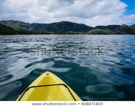 mangrove water in jungle of costa rica stock photo © lopolo