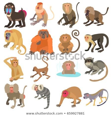 Stok fotoğraf: Farklı · monkeys · eps · 10 · dizayn · eğlence