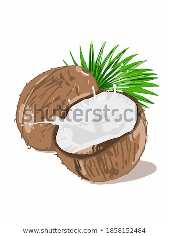 Coconut Whole and Cut Exotic Fruit Vector Poster Stock photo © robuart