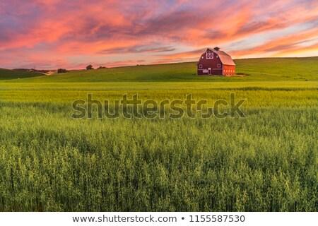 Czerwony stodoła zewnątrz scena ilustracja drzewo Zdjęcia stock © colematt