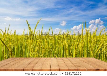 Wood floor at paddy rice field Stock photo © szefei