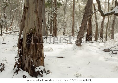 australian bushland covered in layers of snow stock photo © lovleah