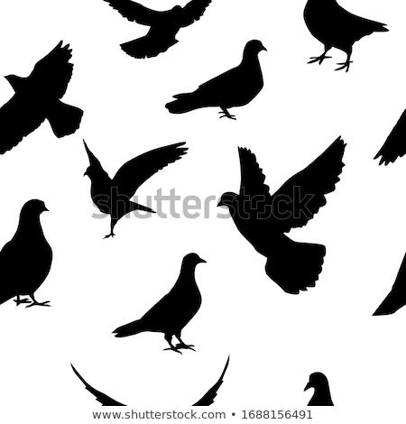 Repülés galamb természet szabadság fehér szabad Stock fotó © nezezon