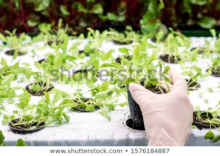 Mains effet de serre travailleur pot vert semis Photo stock © pressmaster