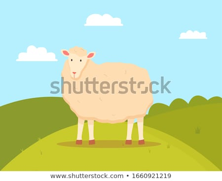 Young Sheep Domesticated Ruminant Animal, Mutton Stock photo © robuart