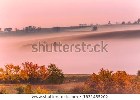 Moravian rolling fields in morning mist Stock photo © dmitry_rukhlenko