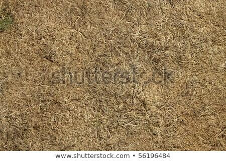 Morto grama sol seca abstrato verão Foto stock © latent