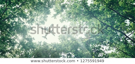 voar · verde · natureza · cidade · casa · branco - foto stock © sweetcrisis