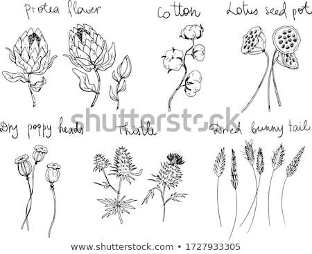 lotus · zaden · hoop · voedsel · kleur - stockfoto © zkruger
