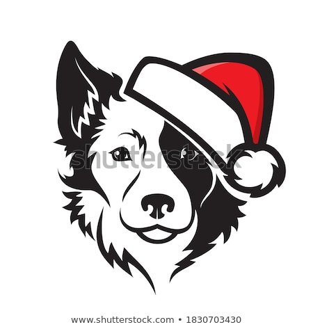 ハウンド · ボーダーコリー · 子犬 · 白 · 友達 · スタジオ - ストックフォト © raywoo