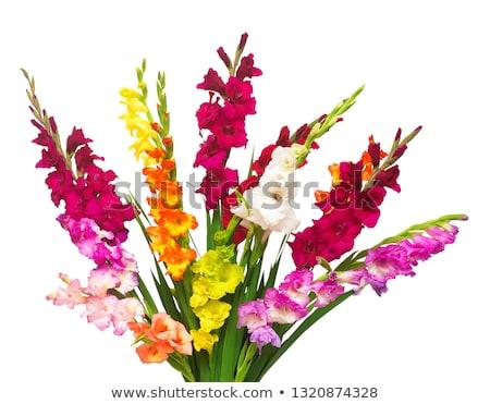 Stock fotó: Köteg · virágok · napos · megvilágított · színes · kék · ég