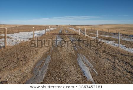 Hálózat préri út Saskatchewan Kanada Stock fotó © pictureguy