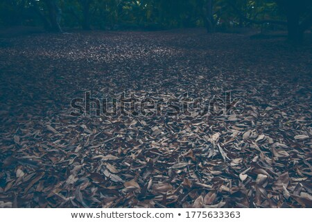 old dry leaf Stock photo © Grazvydas