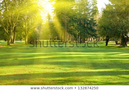 Tree in a field under the sun Stock photo © azjoma