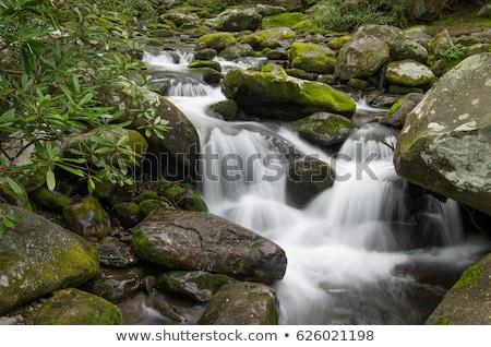 çağlayan küçük orman nehir güzel ontario Stok fotoğraf © cmeder