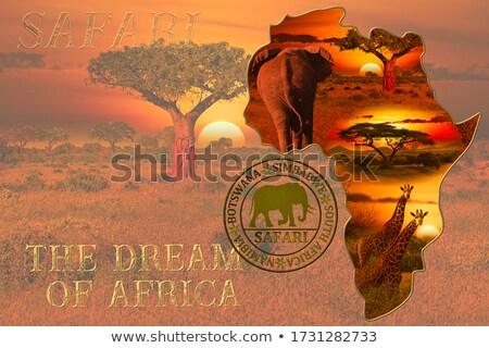 sziluett · elefánt · bika · sziget · folyó · naplemente - stock fotó © adrenalina