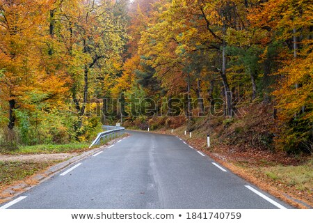 美しい 秋 木 道路 ドライブ フォレスト ストックフォト © Vividrange