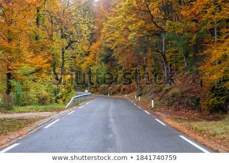 beautiful fall trees with road drive forrest stock photo © vividrange