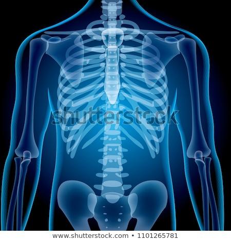 Röntgen csontváz kék 3d render elöl hát Stock fotó © AlienCat