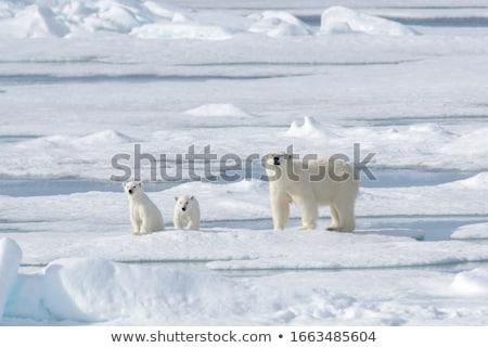 Sarkköri jég messze észak óceán illusztráció Stock fotó © tracer