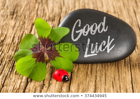 A stone with a four-leafed clover ans a ladybug Stock photo © Zerbor