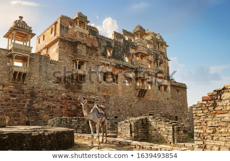 camels at the relics of an ancient castle stock photo © bbbar