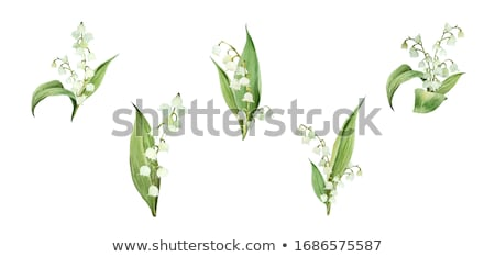 flower lily valley bouquet lily of valley stock photo © orensila