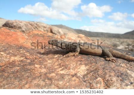 réptil · deserto · ilustração · grama · azul · animal - foto stock © bluering