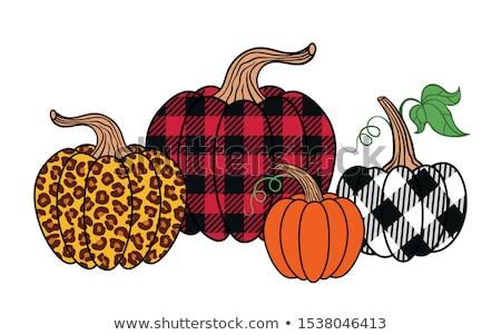 Pumpkin set Stock photo © kali