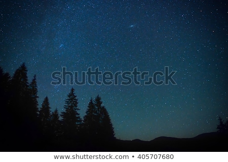 dark blue night sky above the mistery forest stock photo © vapi