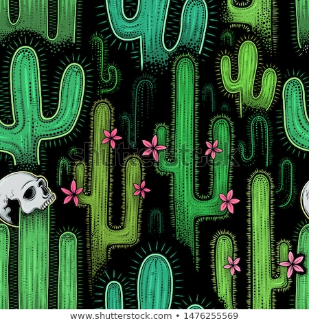 Skull with the succulent plants. Stock photo © frescomovie