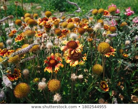 насекомые лес поляна книжка-раскраска цветы дизайна Сток-фото © Olena