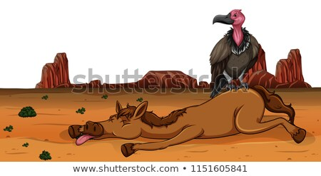 Dögkeselyű halott ló illusztráció természet tájkép Stock fotó © bluering