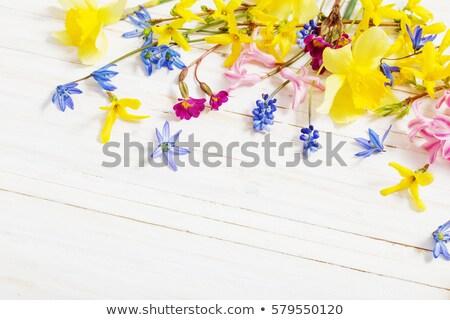 Voorjaar narcissen groene tuin exemplaar ruimte Pasen Stockfoto © neirfy