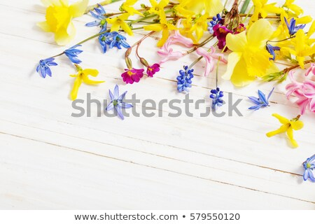 Bahar nergis yeşil bahçe bo Paskalya Stok fotoğraf © neirfy
