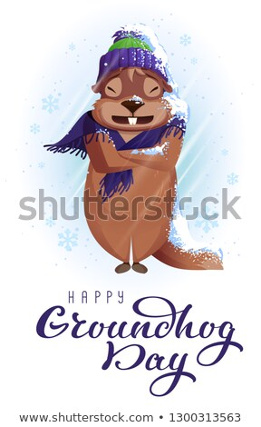 Groundhog Day weather forecast. Woodchuck was very cold and wrapped in scarf Stock photo © orensila