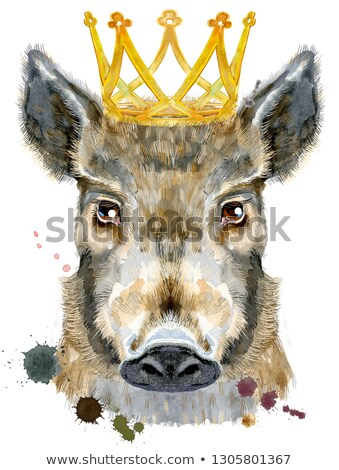 Watercolor portrait of wild boar with golden crown Stock photo © Natalia_1947