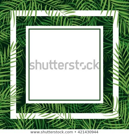 Keret keret trópusi pálmalevél absztrakt levél Stock fotó © sonia_ai