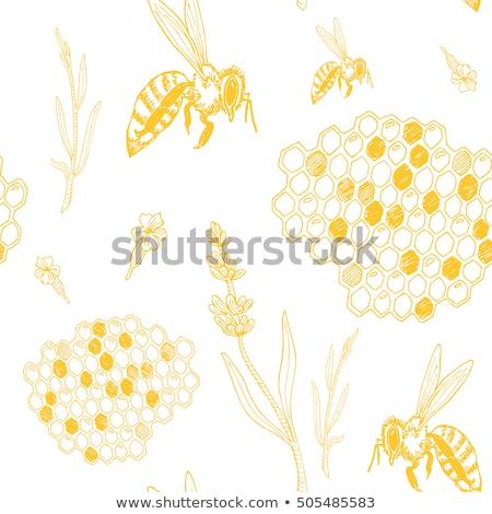 вектора · Bee · соты · икона · изолированный · белый - Сток-фото © krisdog