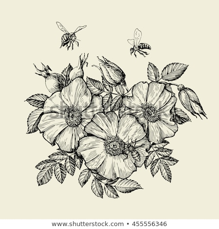 Flying Honey Bee Insect Gathering Nectar Vector Stock photo © pikepicture