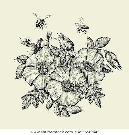 honingbij · insect · cartoon · illustratie · grappig · bee - stockfoto © pikepicture