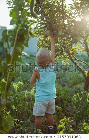 pequeno · menino · alimentação · maçã · retrato · bonitinho - foto stock © lopolo