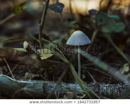 non edible mushroom grows from log Stock photo © romvo