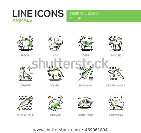 Zwierząt ikona kolekcja egzotyczny przyrody symbolika Zdjęcia stock © cienpies