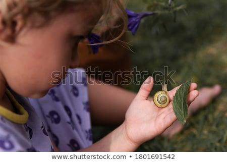 улитки · природы · ребенка · весело · мальчика - Сток-фото © chrisroll