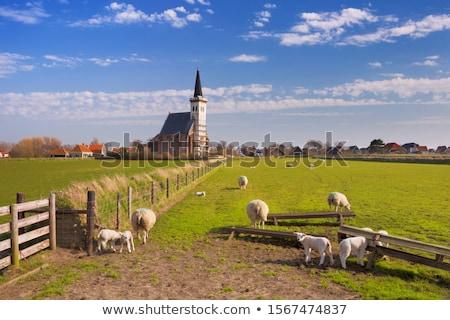 ovejas · dos · Pascua · hierba · campo · verde - foto stock © phbcz